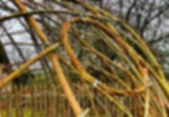Vrbičky, vrboviště, vrbové stavby, igloo z vrby, tunel z vrby