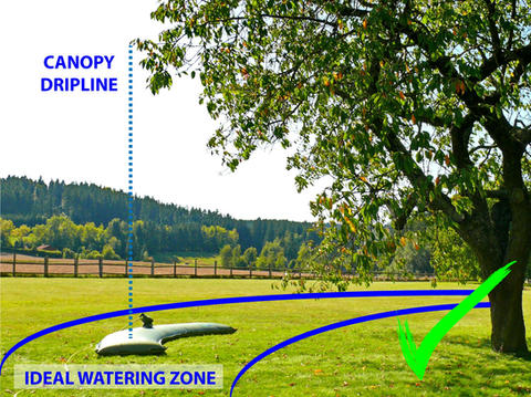 ALWAYS IRRIGATE LARGE TREES IN THE IDEAL WATERING ZONE