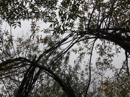 Rekontrukce vrbové stavby v Říčanech