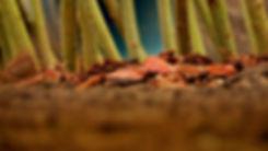 Vrbové stavby - údržba