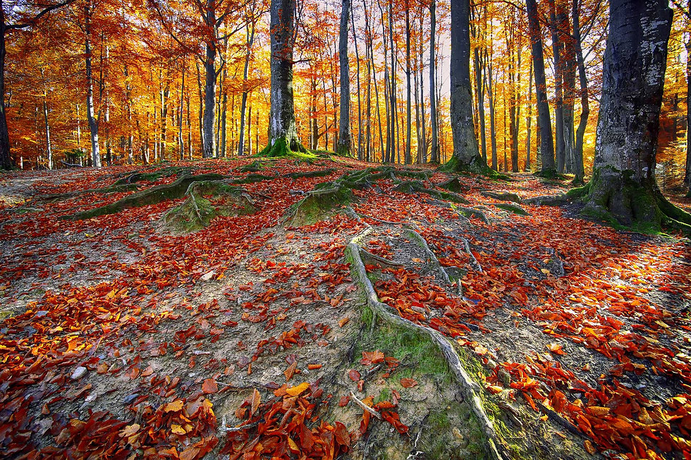 1-autumn-forest-in-the-mountains-P6CSHUJ