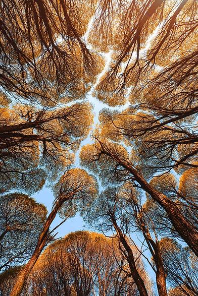 autumn-landscape-bottom-view-tree-tops-t