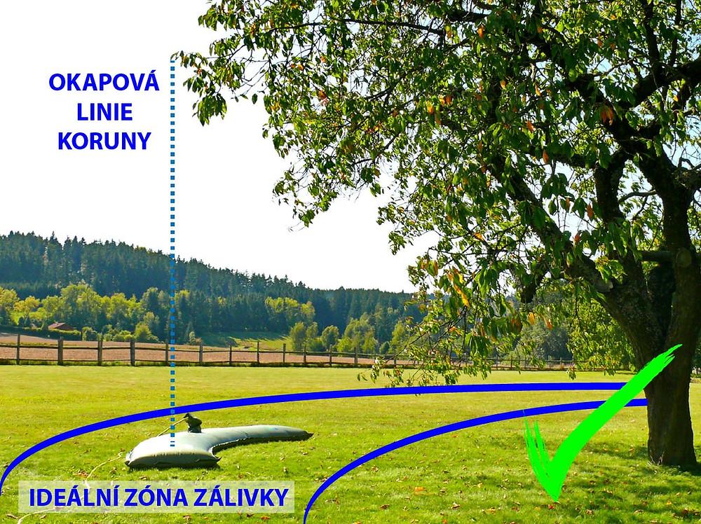 Jak zalévat vzrostlé stromy? Zavlažovacím vakem TREEIB® v ideální zóně zálivky dospělého stromu, blízko okapové linie stromu.