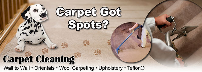 champion carpet cleaner cumbria