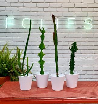 cactus $160.000-$180.000