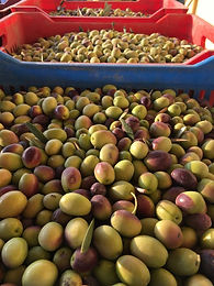 Pictures from our 2018 Harvest Season