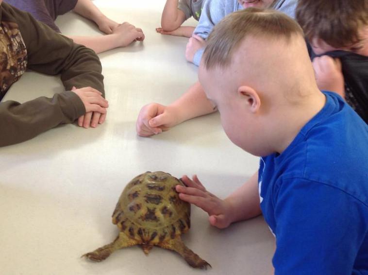 school_turtle_op_800x597.jpg