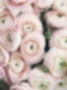 anniversary-beautiful-bloom-931178.jpg