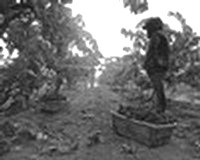 What to expect when tasting old vine wines