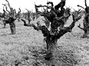 Historic Vineyard Society Membership