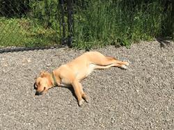 Zelda sunbathing