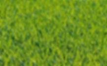 uncut grass 2