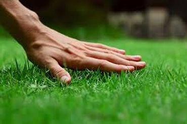 uncut grass 1