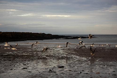 Birds, Rush Harbour, 2019.