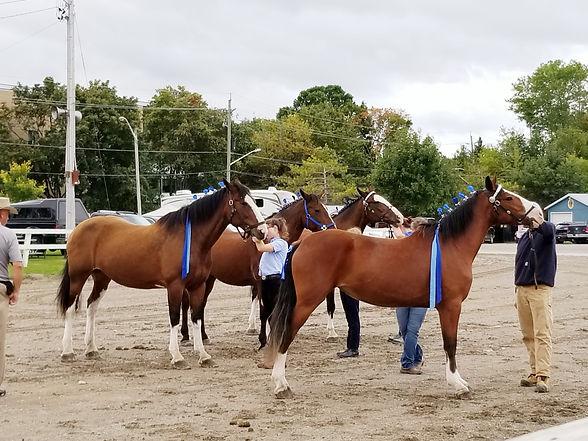 20190914_Horses.jpg