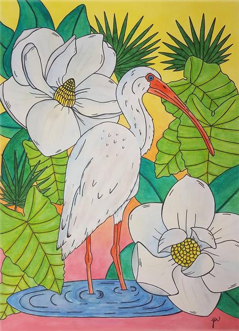 Magnolia Ibis