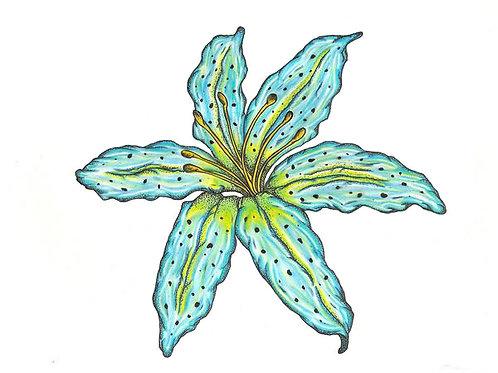 """Lily II"" Fine Art Print"