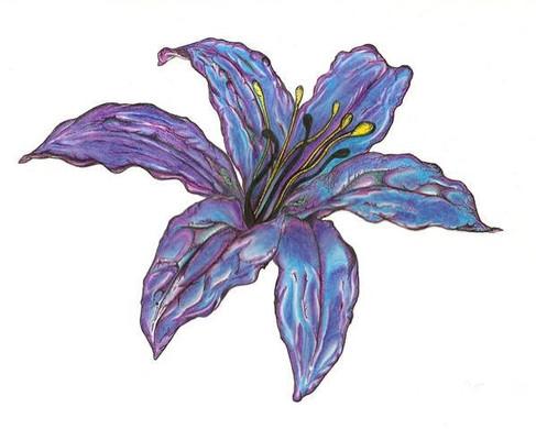 Lily Flower II