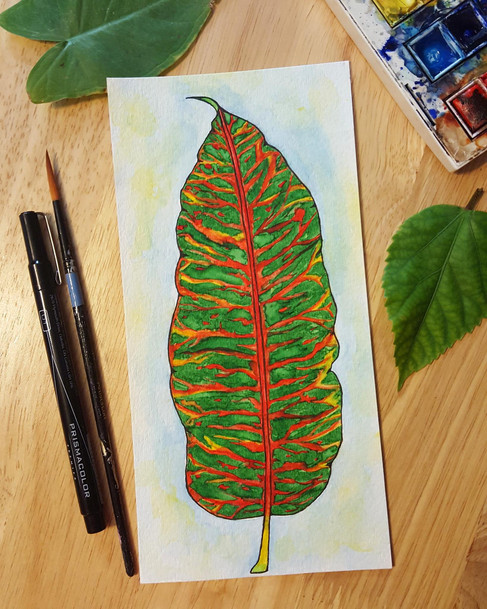 Croton Leaf Study