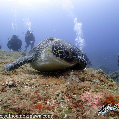 Mais um dia em Kerama - Aloha Divers Okinawa - Mergulho em Okinawa