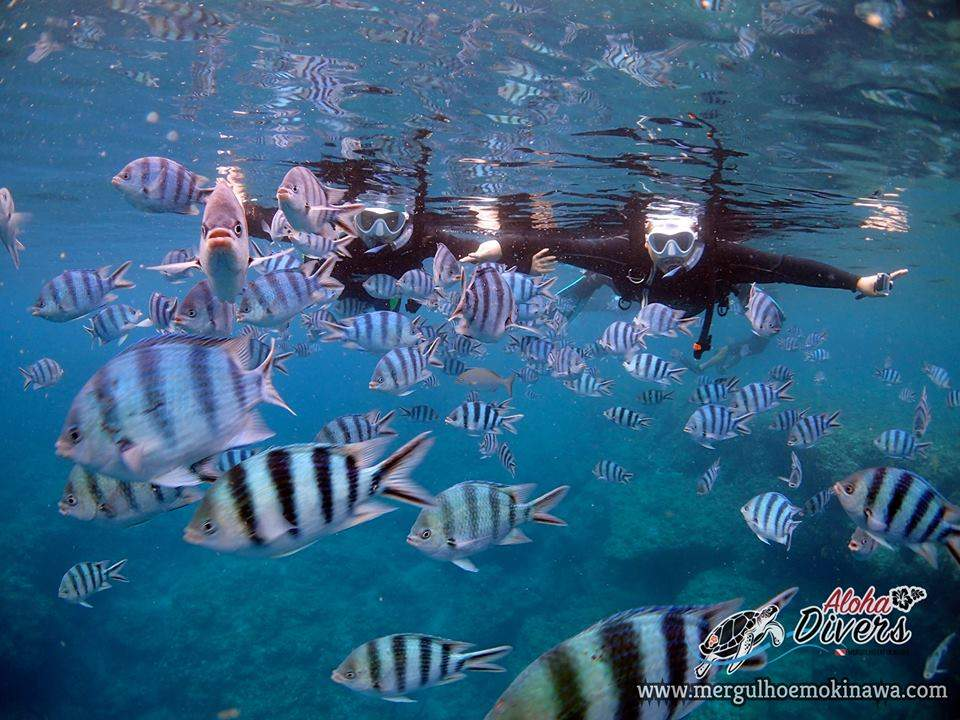 Snorkeling - Aloha Divers Okinawa