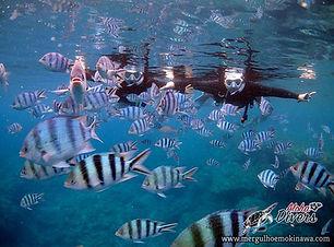 Snorkel em Maeda Misaki - Aloha Divers O