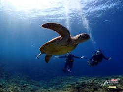 Turtle - Aloha Divers Okinawa