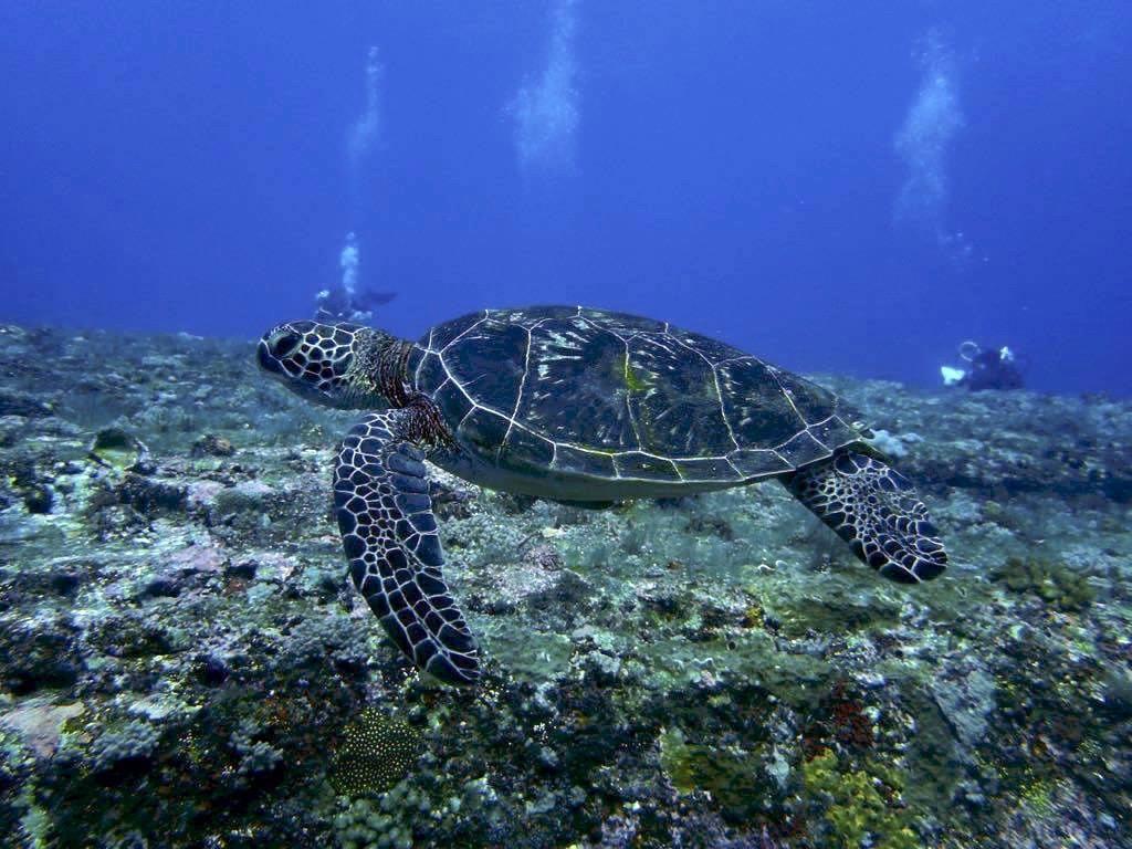 Aloha Divers - Mergulho em Okinawa