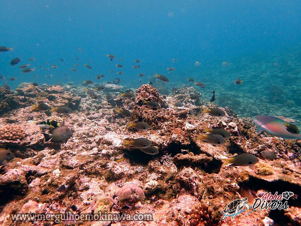 Mergulho em Kerama - Aloha Divers Okinawa - Mergulho em Okinawa