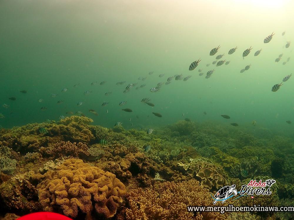 Mergulho de Praia em Sunabe - Aloha Divers Okinawa - Mergulho em Okinawa