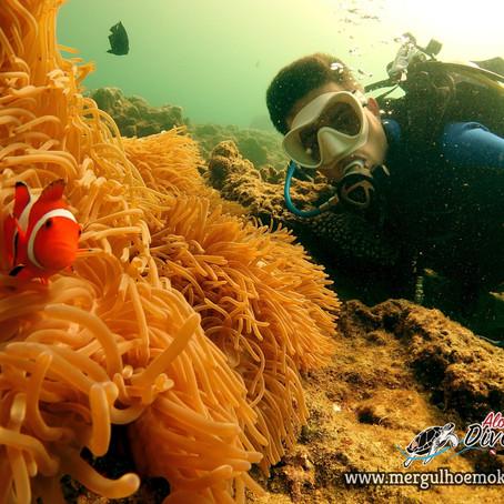 Novo mundo, novo roob - Aloha Divers Okinawa - Mergulho em Okinawa