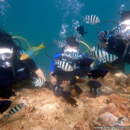 Conhecendo o Mundo incrível do Mergulho com Aloha Divers Okinawa - Mergulho em Okinawa