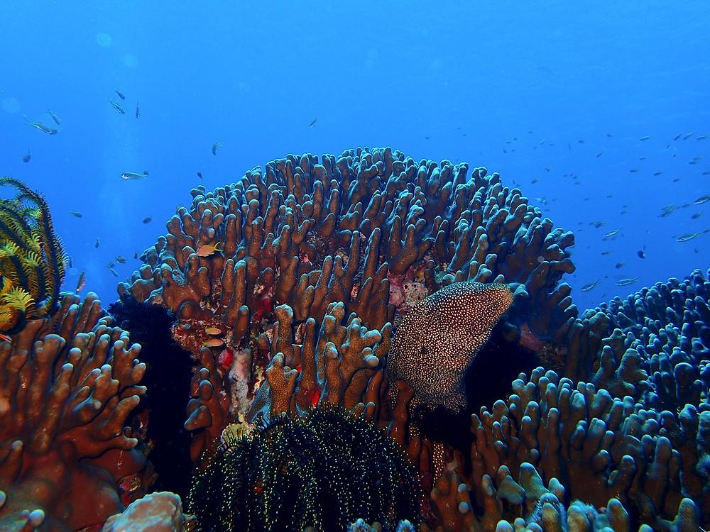 Moreia nas Ilhas de Kerama