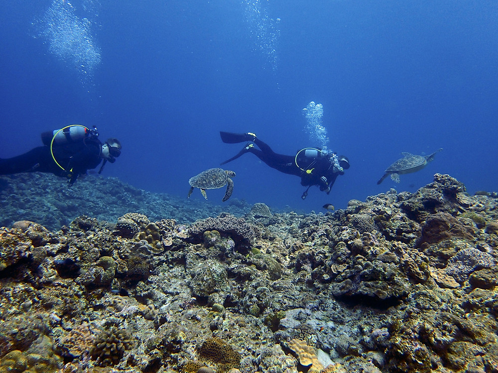 Duas Tartarugas nadando - Aloha Divers Okinawa