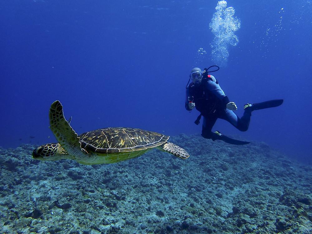 Tartaruga nas Ilhas de Kerama
