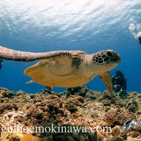 Um dos Lugares mais Bonito do Mundo - Mergulho em Okinawa - Aloha Divers Okinawa