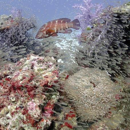 Liveaboard in Thailand - Aloha Divers Okinawa