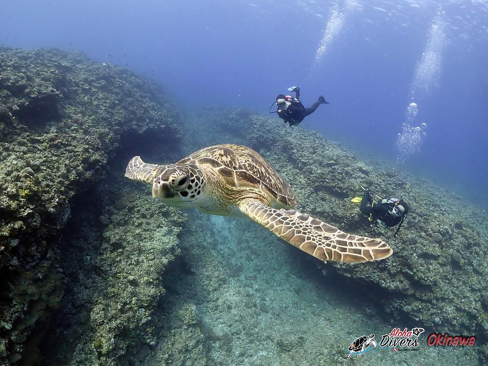 Turtle in Kerama Island - Aloha Divers Okinawa