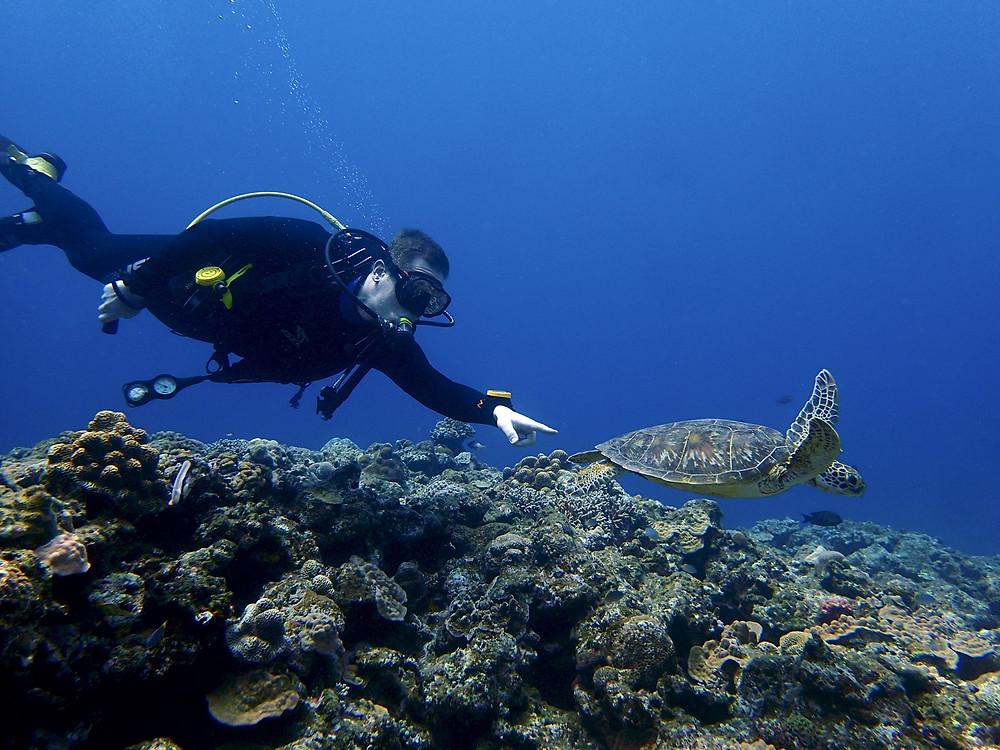 Mergulhador e a Tartaruga - Aloha Divers Okinawa