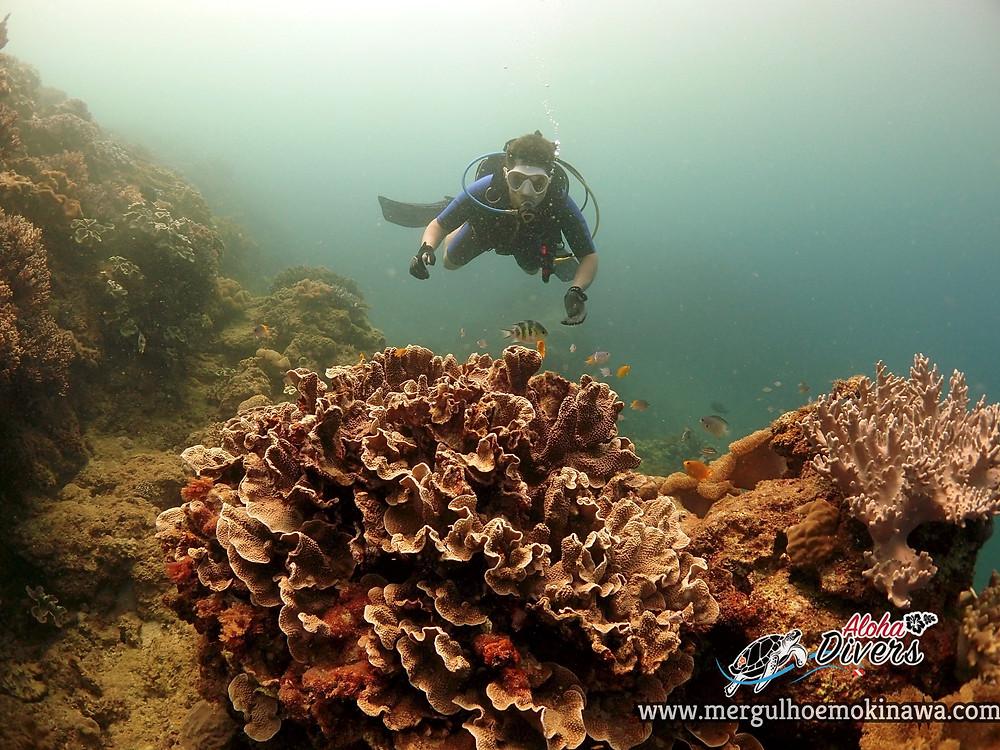 Mergulho Experimental - Aloha Divers Okinawa- Mergulho em Okinawa