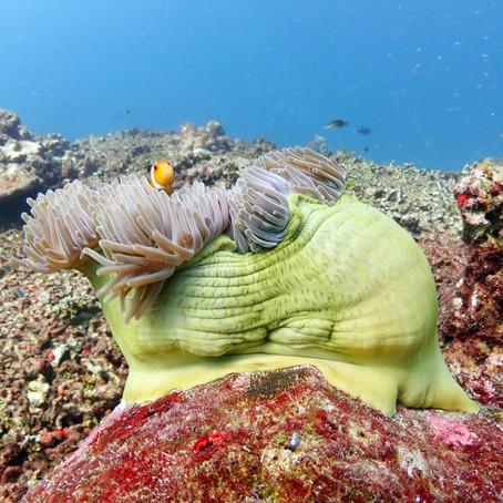 A beleza do mergulho em Okinawa - Aloha Divers Okinawa