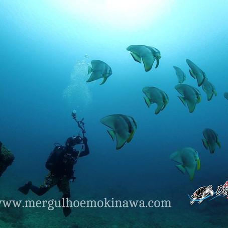 Mergulho em Chatan & Yomitan - Aloha Divers Okinawa - Mergulho em Okinawa