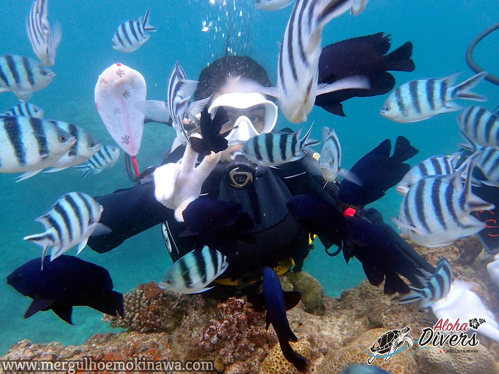 Mergulho Experimental com a Brasileira em Okinawa - Aloha Divers Okinawa - Mergulho em Okinawa
