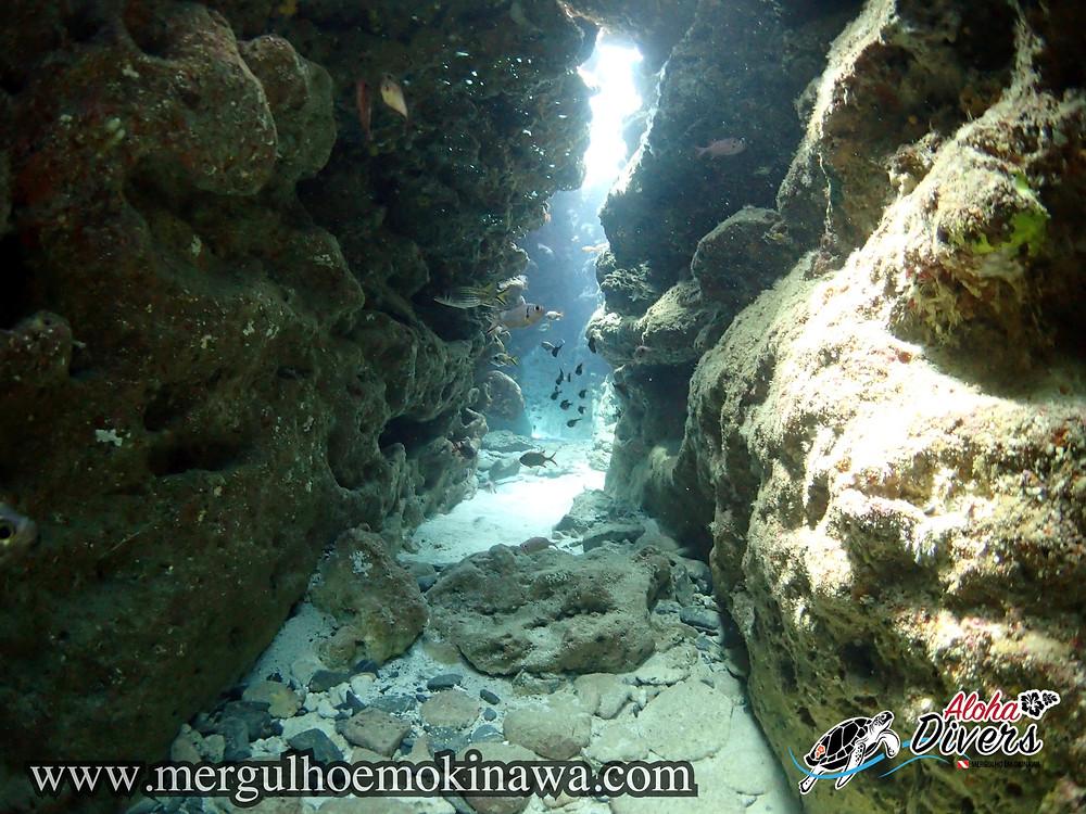 Caverna do Tubarão Galha Branca
