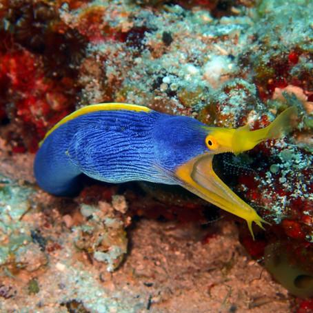 Mergulho Incrível nas Ilhas de Kerama