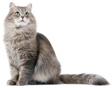 Cat-PNG-HD.png