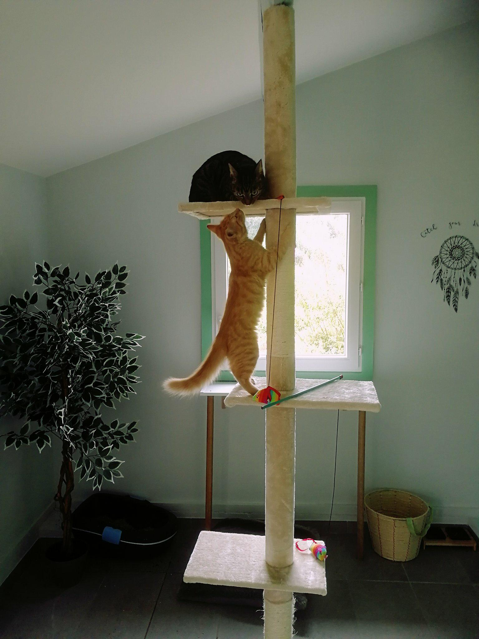 Kitty et son copain :)