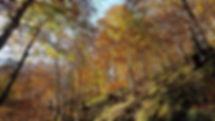 Forêt de hêtres Ustou