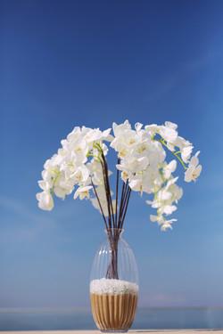 Weiße Orchideenrispen in Vase