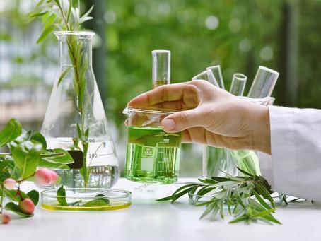 Coronavirus e Eucalipto: partito uno studio su un componente del pool di oli essenziali Happy